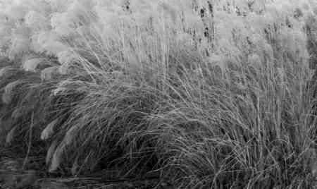 Gentle Long Grass