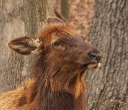 Elk - Better Hair Day
