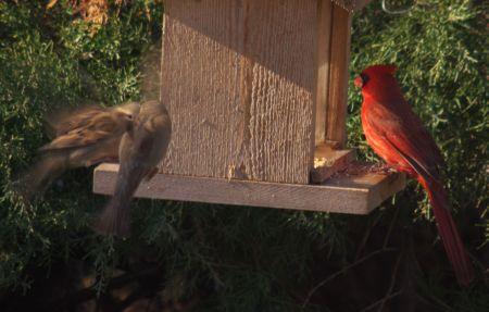 Bird Motion