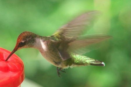 Inspiring Hummingbird Named Norm