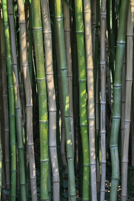 abstract, bamboo, green, nature