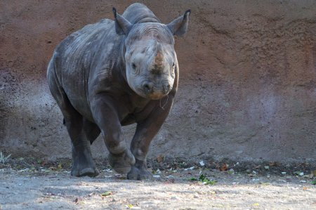 world rhino day, zoo, extinction, poaching, south africa