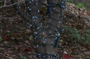 lights, holiday