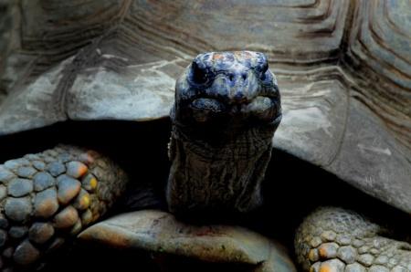 wpc challenge, tortoise, zoo, shadow