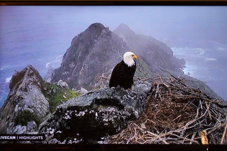 WPC, eagle, catalina, nest, atop, wordpress, webcam