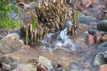 wpc, wish, robin, spring, not silent spring, rachel carson, environment, ecologoy, bath