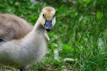 wpc, peek, gosling, peep