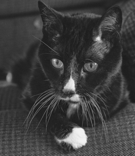 black and white cat, monochrome, photo,